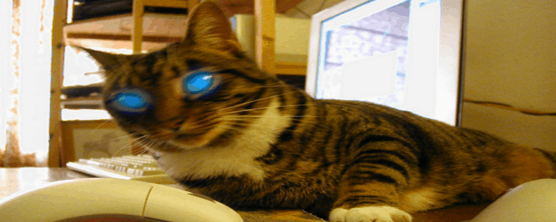 When Do We Get Catbots? [video]